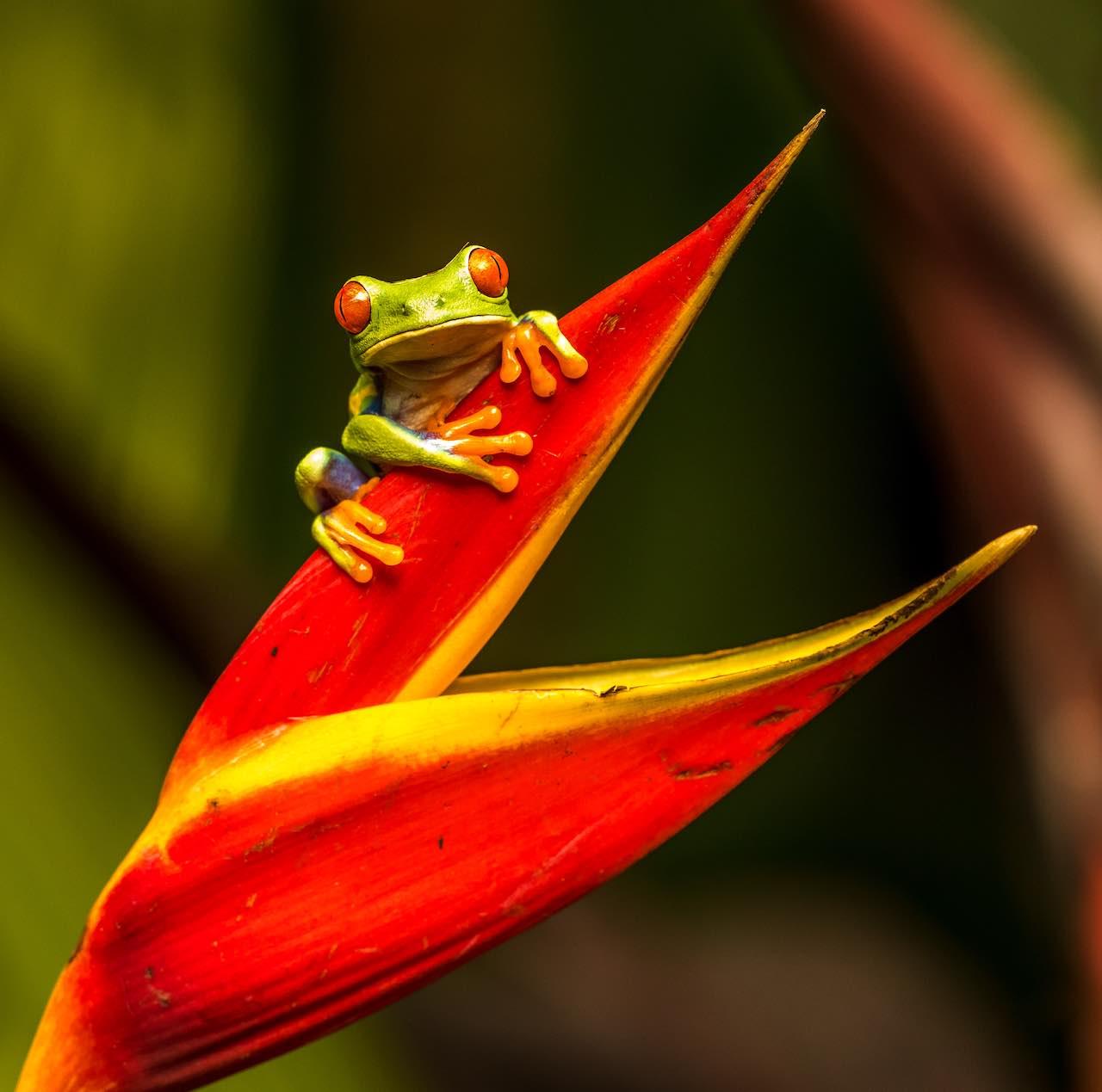 Costa Rica Credit Zdenek Machacek