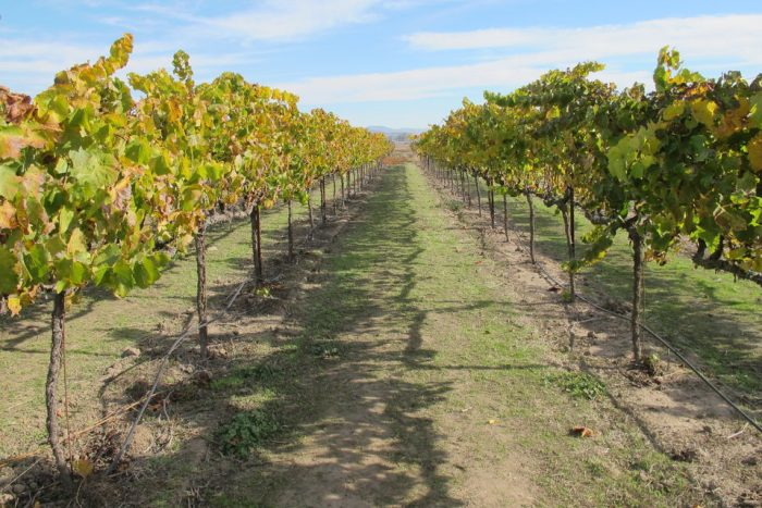 Full-Day Napa Valley Wine Tour from San Francisco