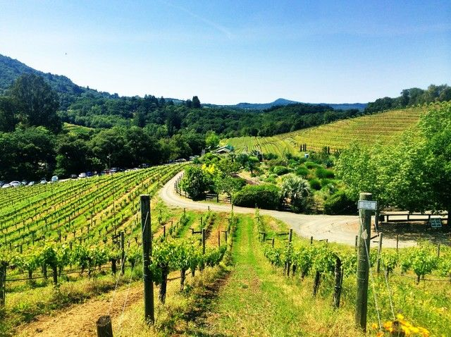 From San Francisco: Full-Day Sonoma Valley Wine Tour
