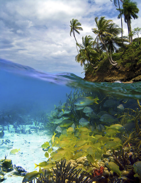 Caribbean Adventure: Snorkel & Zip Line Tour in Panama