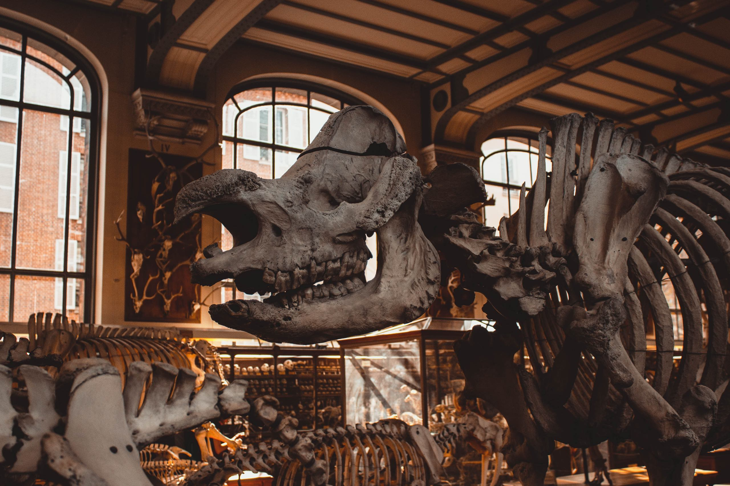 National Museum of Natural History   Photo: Mat Reding