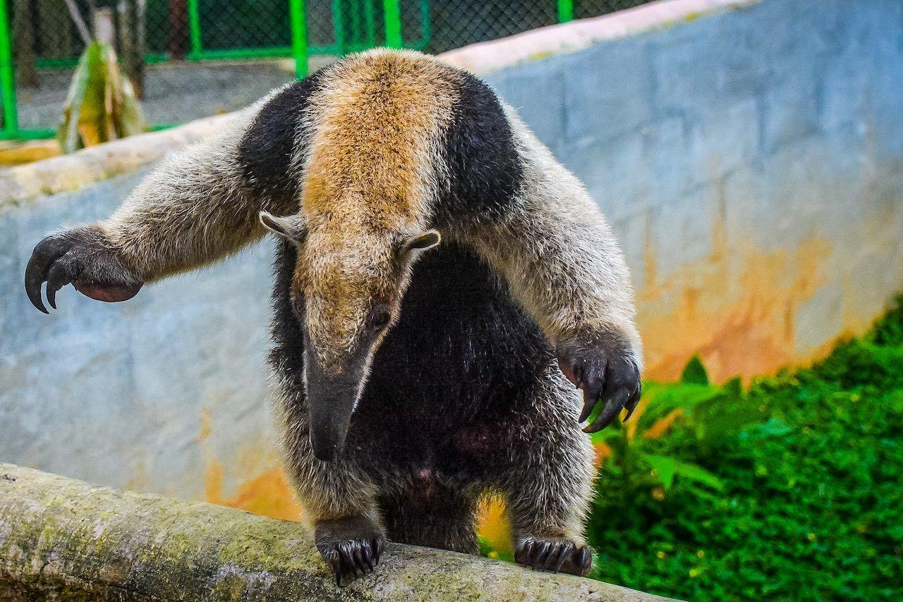 Alturas Wildlife Sanctuary Dominical Costa Rica