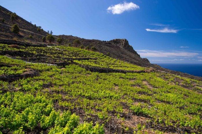 European Wine Regions