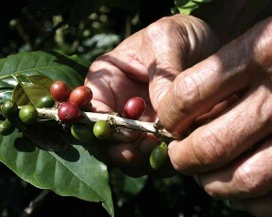 Huatulco Coffee Plantation Tour