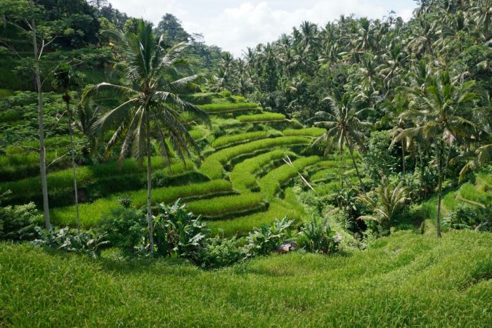 Best of Bali: Private Customised Full-Day Tour