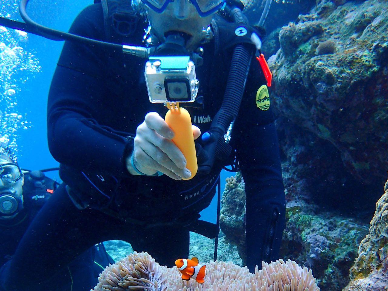 Komodo National Park Indonesia Diving Clown Fish