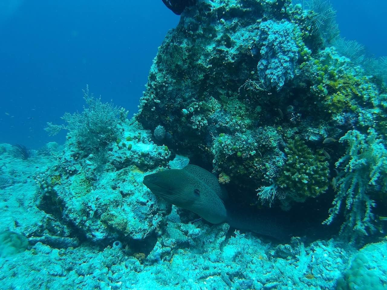 Komodo National Park Indonesia Diving Moray Eel