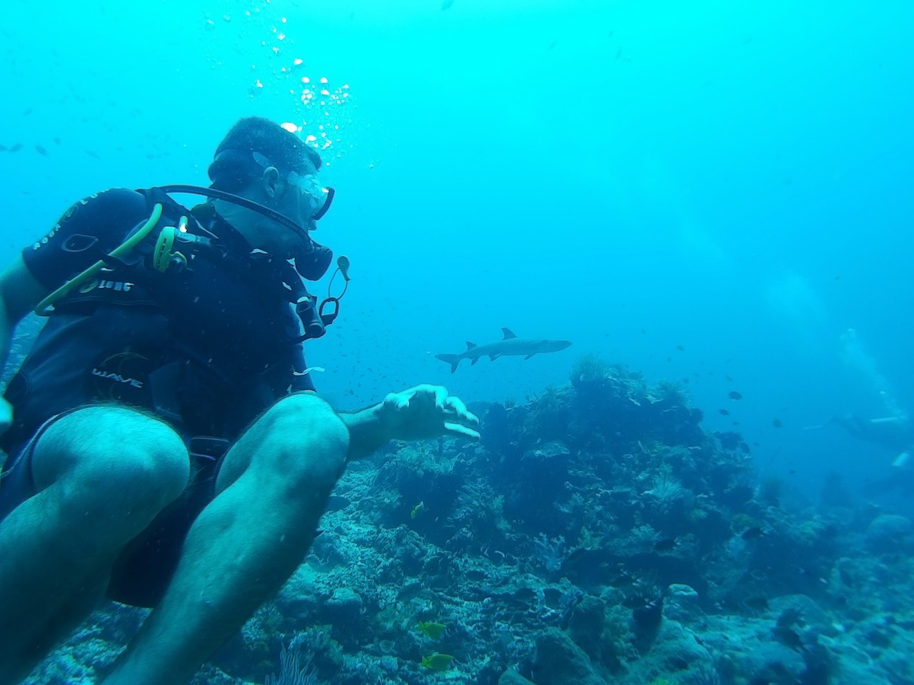 Komodo National Park Indonesia Diving White Tip Shark