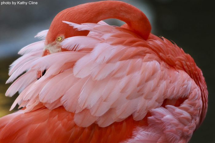 Flamingo Garden VIP Tour