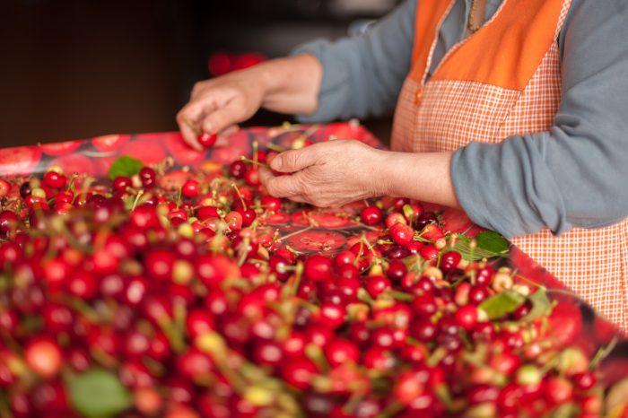 Picota Cherries Caceres Spain