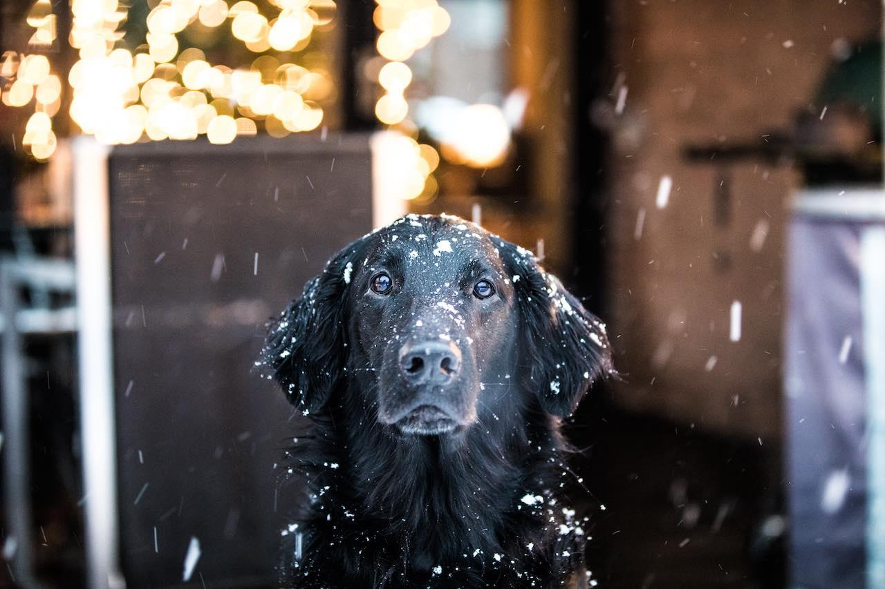 Dog in Snow Amsterdam