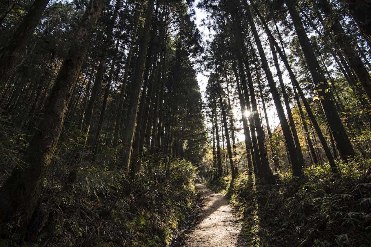 Nakasendo Forest Japan