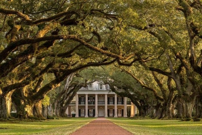 Oak Alley Plantation & Airboat Swamp Combo
