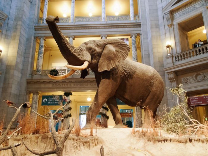 Natural History Museum & National Gallery of Art Guided Tour