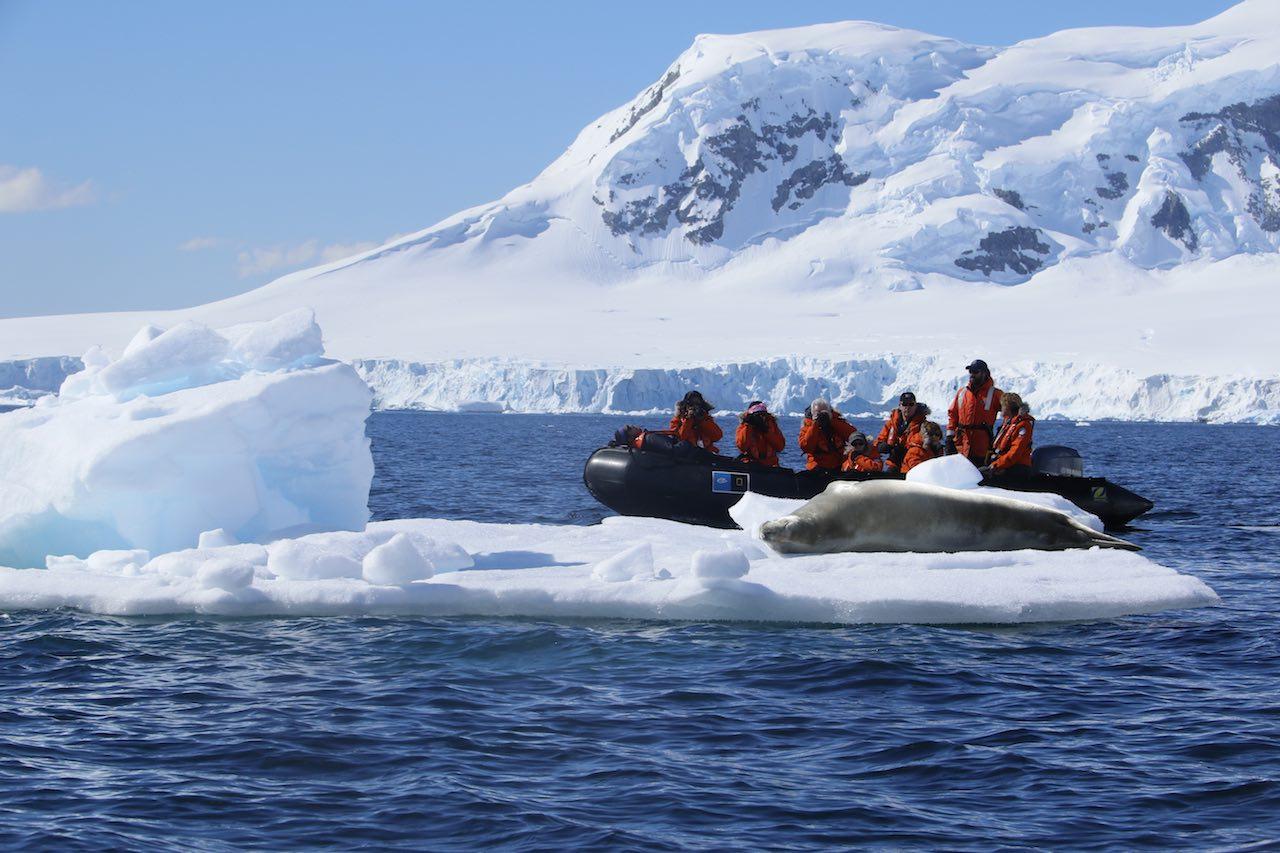Antarctica Seal