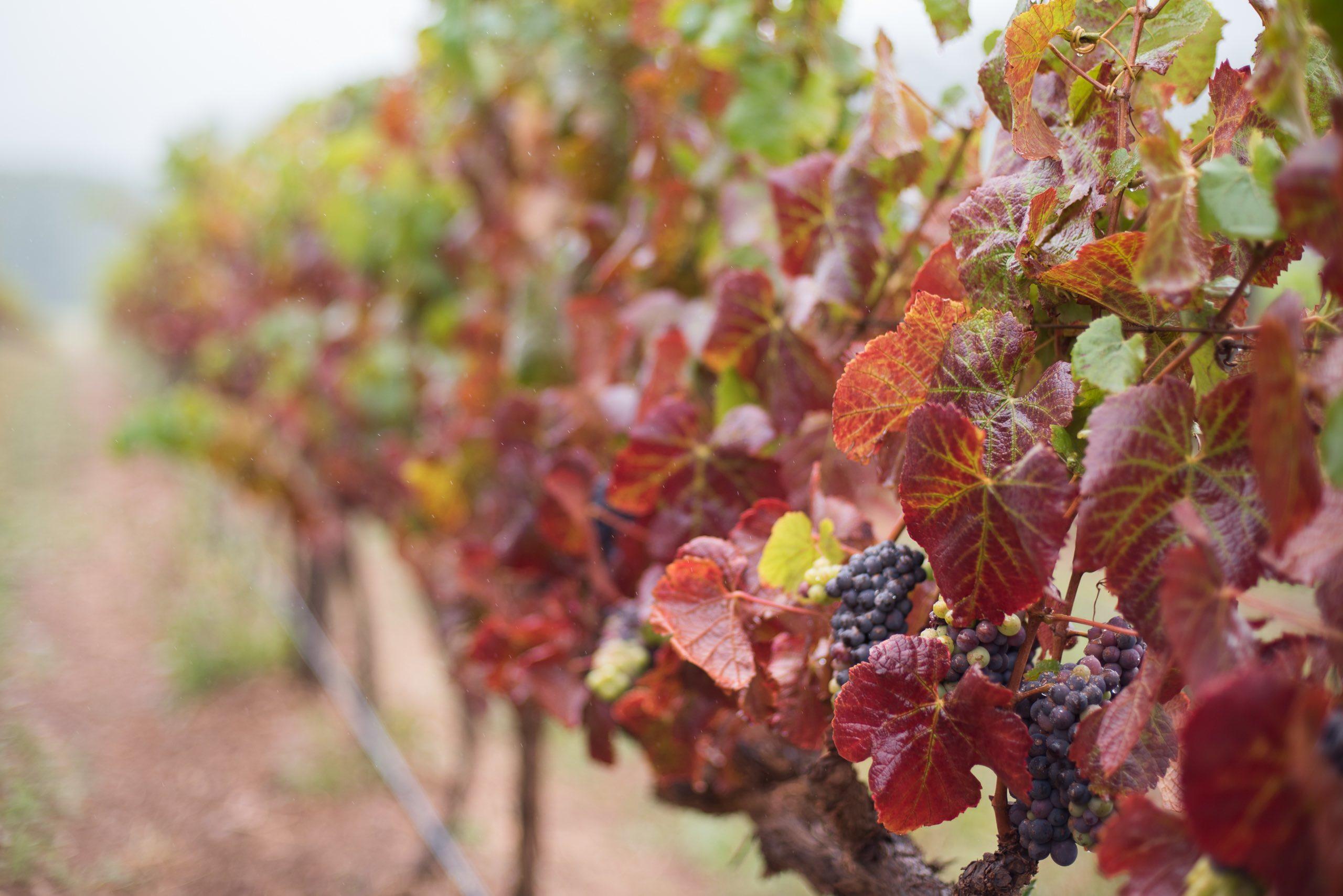 Hamilton Russel Wine Estate Hermanus