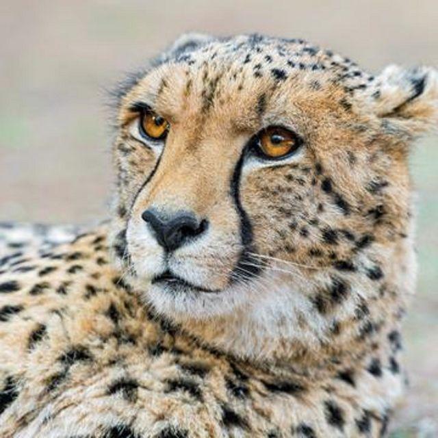 Johannesburg: 5-Day Kruger National Park Safari Tour
