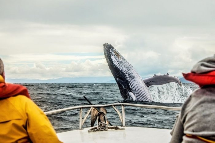 3-Day Quebec City and Tadoussac Whale Watching from Montréal