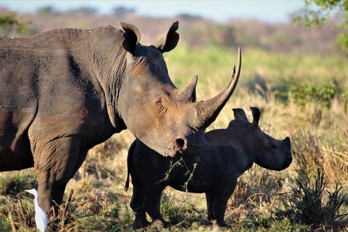 Meru National Park Safari