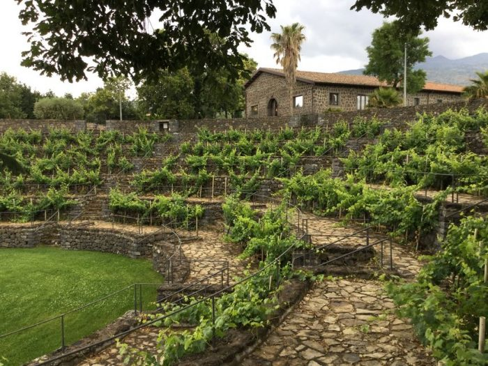 From Syracuse: Etna Wineries Tour w/ Lunch in Farmhouse
