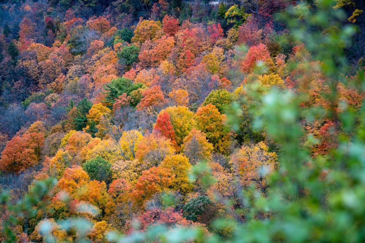 Fall Coloured Forest Canada
