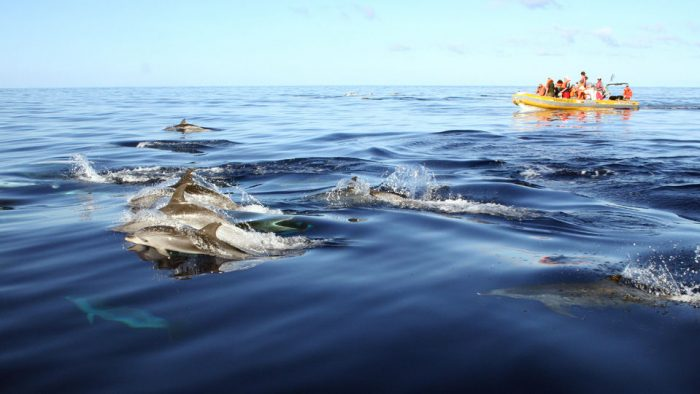 Franca do Campo: Private Marine Wildlife Boat Tour