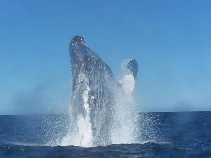 Cabo San Lucas Private Whale-Watching Tour