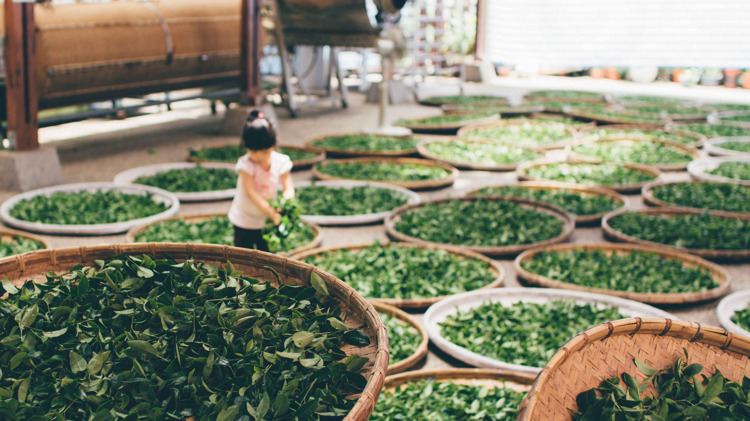 Tea Taiwan