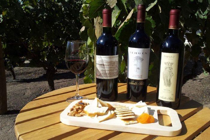 From Santiago: Santa Rita Winery Small Group Tour