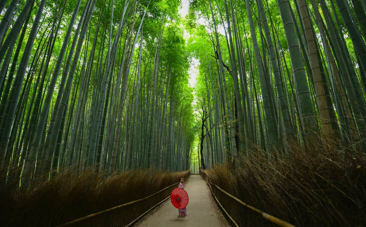 Bamboo forest | Photo: Walter Mario Stein