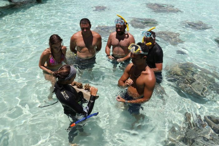 Coral Nursery Snorkeling Tour with Marine Biologist Guide