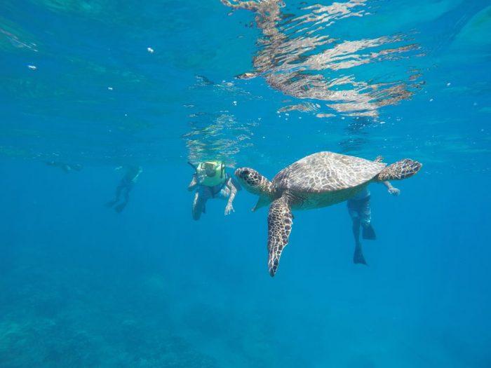 Hanauma Bay Guided Snorkel Tour