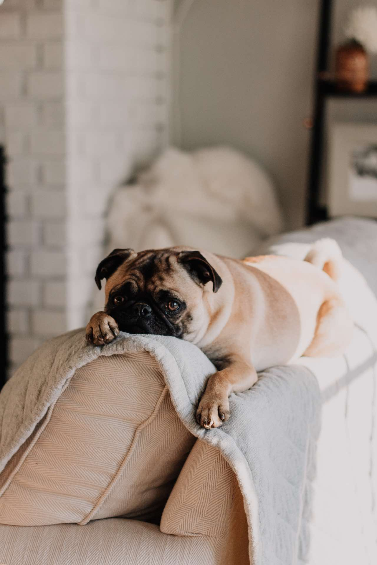 Pet-Friendly Hotels In New York City