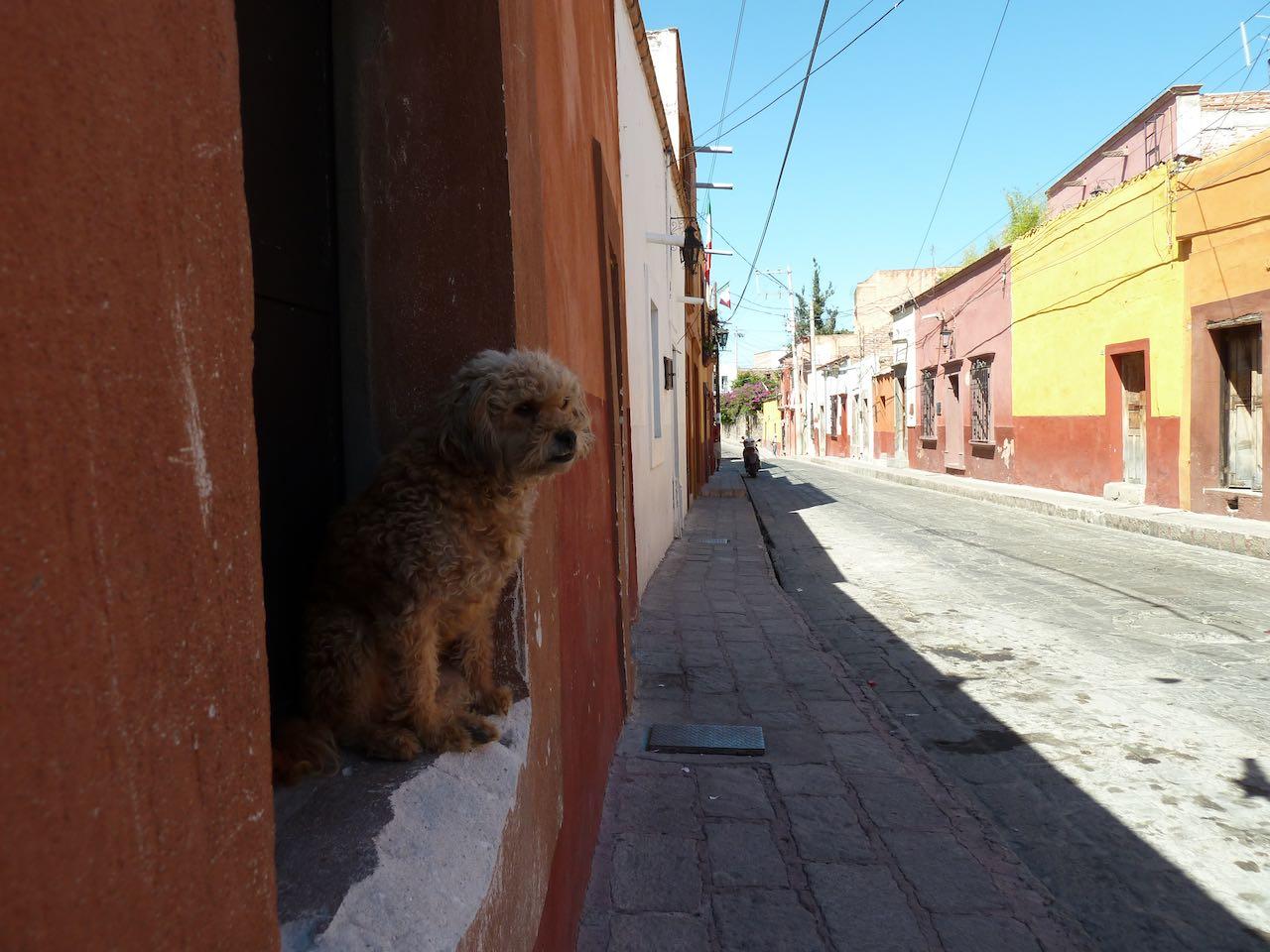 dog peeking out a window