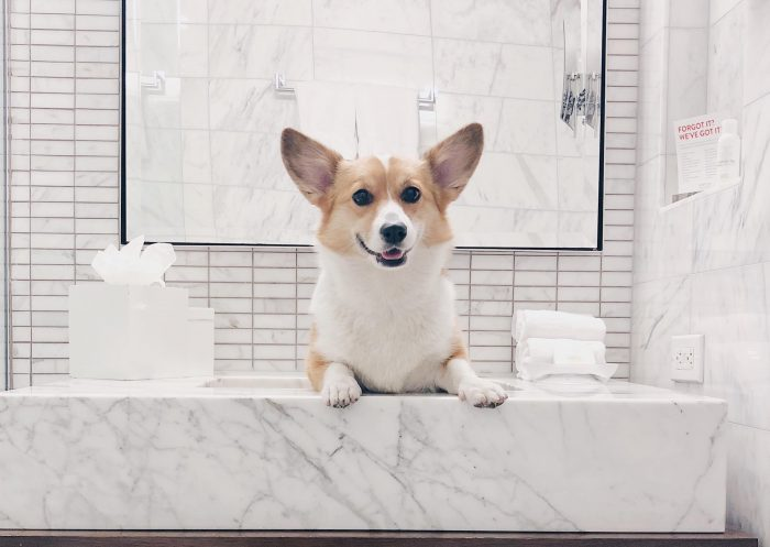 The Best Pet-Friendly Hotels in New York City