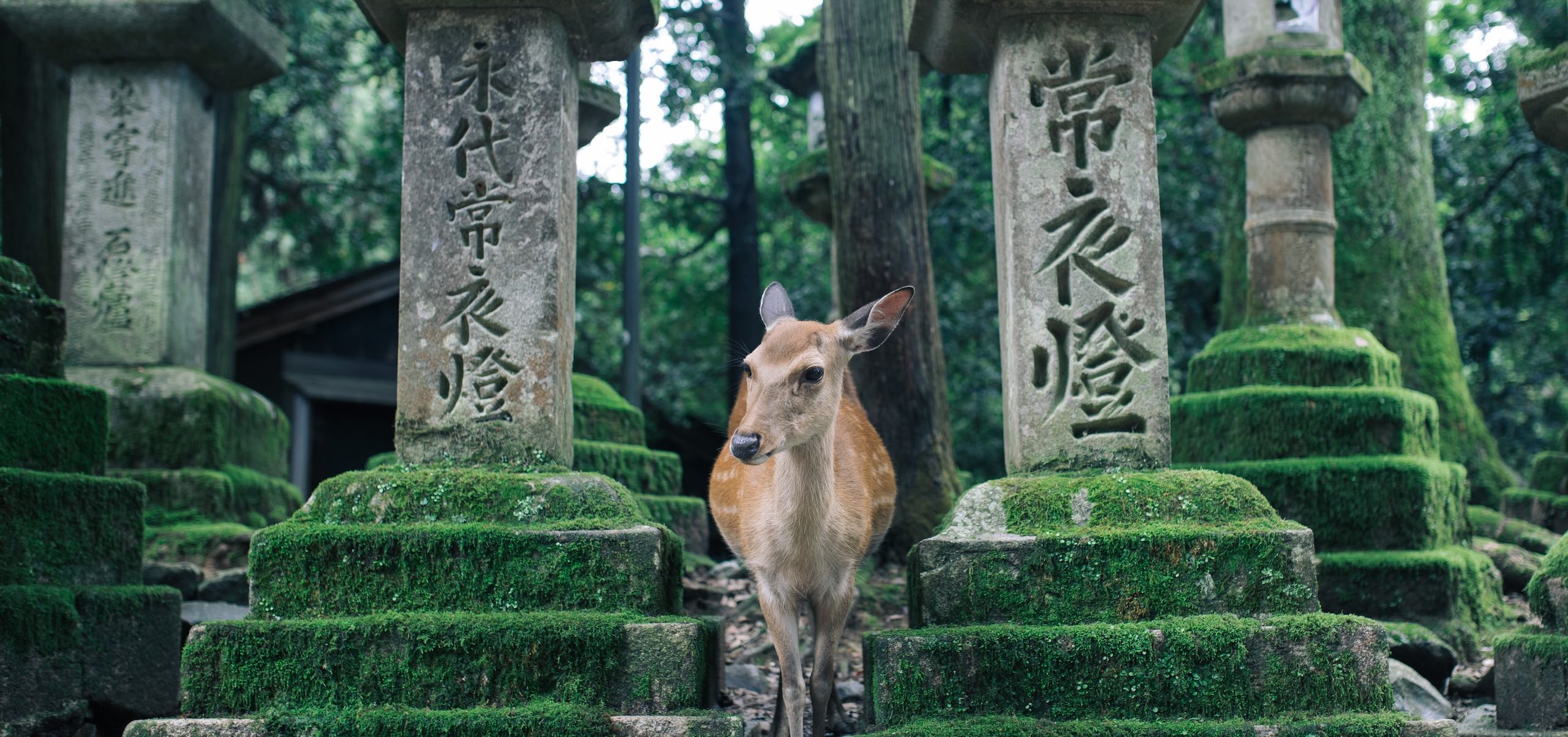 Nara Park | Photo: Joey Huang