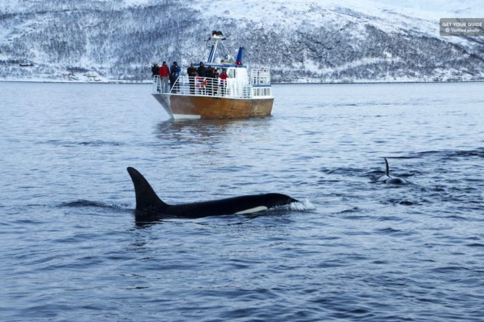 Polar Whale and Sea Bird Safari by Boat from Tromsø
