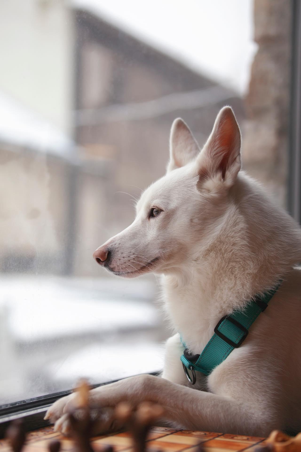 Dog Estonia