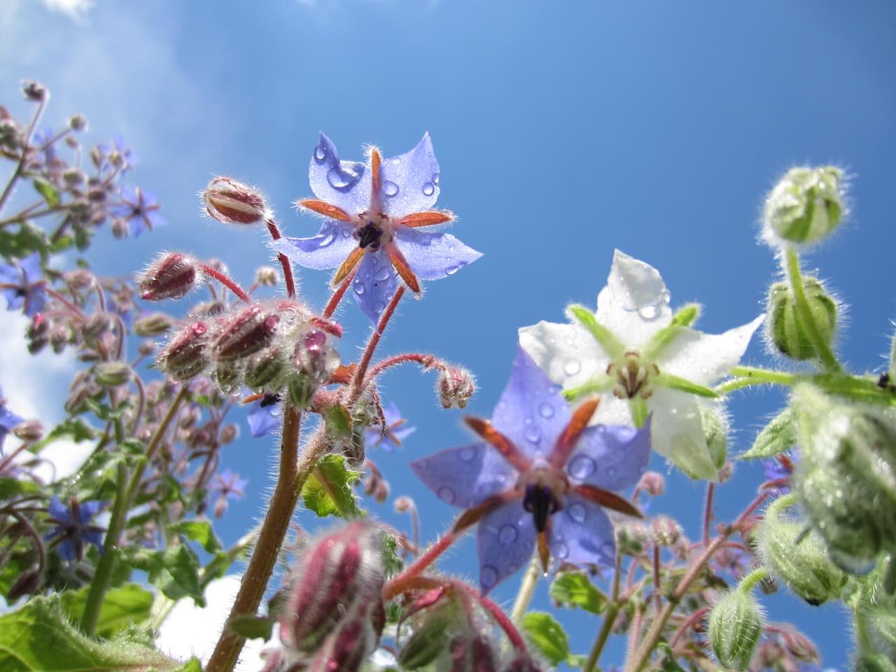 Flowers Estonia