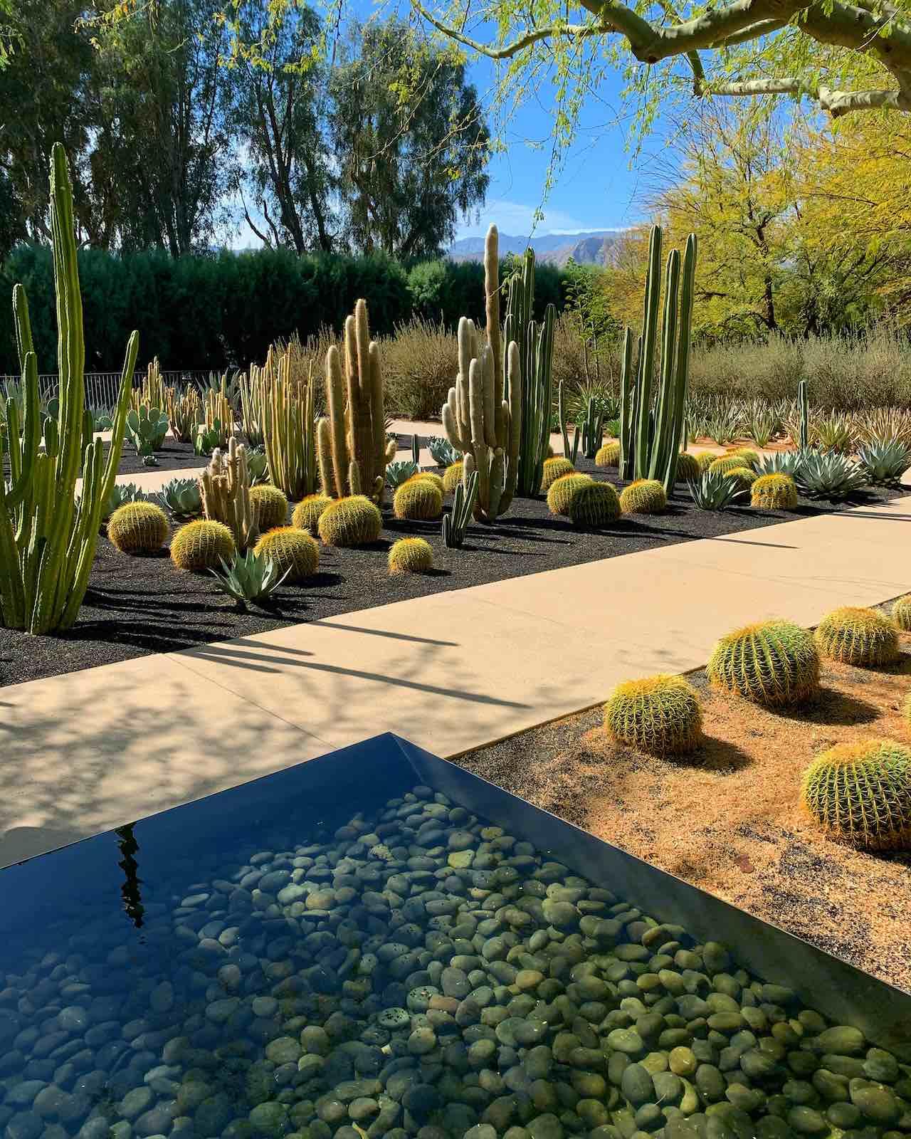 Sunnylands Visitor Centre Garden